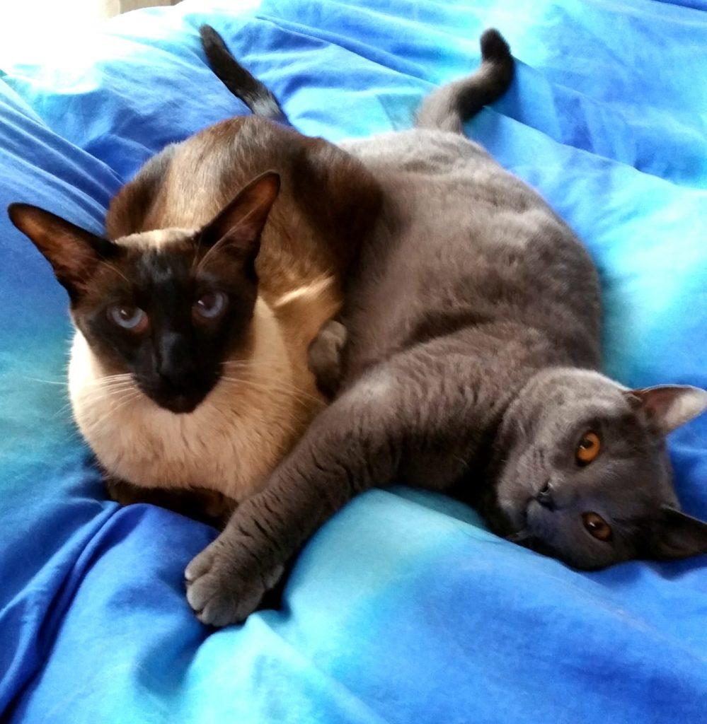 Cani e gatti - Foto gatti