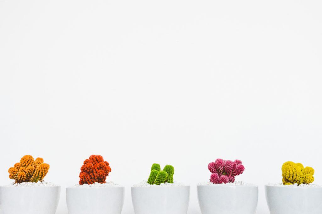 Masciadri - cactus